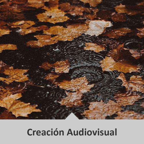 Creación Audiovisual. Hojas de otoño flotando en el agua.